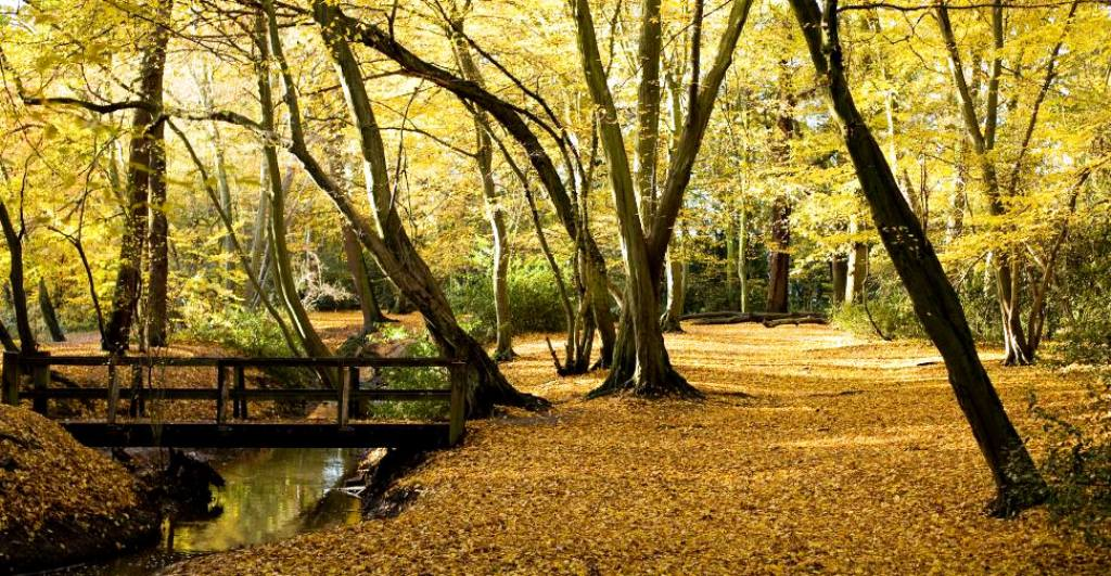 Forrest in the Autumn with leaves on the ground in West Essex